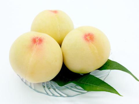 果肉が柔らかくて果汁たっぷり!桃の女王、岡山白桃最高ブランド・清水白桃(2kg7~8玉)