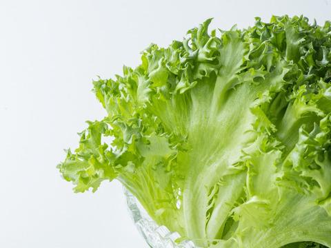 【77%がリピート注文】健康野菜村 ≪フリルレタス6個≫【熨斗付き】温かい料理にも!