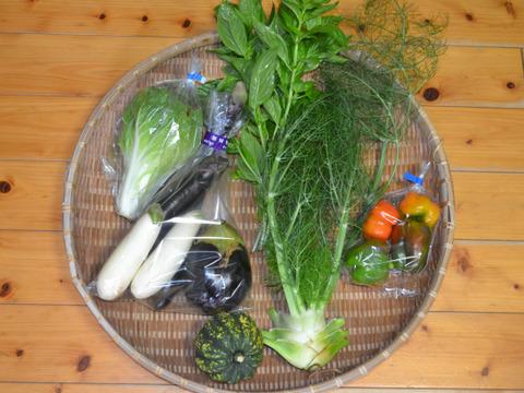 おまかせ野菜セット(小) 60サイズ箱 4~6種類