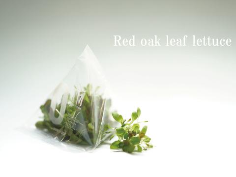 【レッドオーク リーフレタス】マイクログリーン(7g)成熟野菜の約5倍の栄養価!