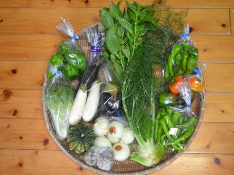 おまかせ野菜セット(大) 100サイズ箱 8~10種類