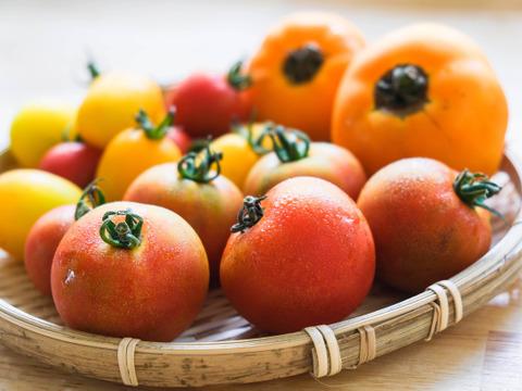 カラフル*トマト食べ比べ (約1kg)