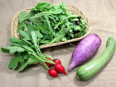 たっぷりサラダ!濃厚ベビーリーフと野菜のセット