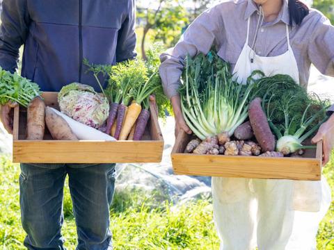 オーガニック  西洋野菜・各地伝統野菜 季節の野菜セット S