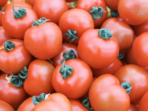 【業務用サイズ】中玉トマト フルティカ(9kg)