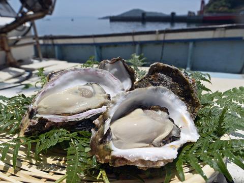 超絶クリーミー!大きい錦盛丸岩牡蠣300〜400グラム(7個入り)
