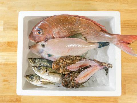おまかせ!旬の鮮魚セット(6~10匹)☆☆80サイズ箱