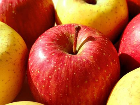 【お楽しみBOX】なかむら果実園のシークレットりんご(大玉6個前後)
