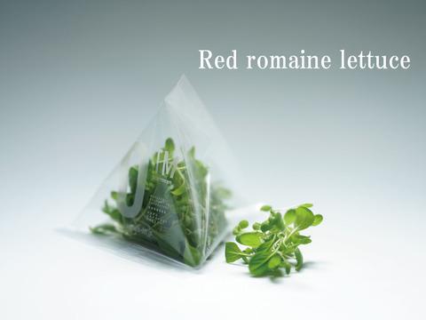 【レッドロメインレタス】マイクログリーン(7g)成熟野菜の約5倍の栄養価!