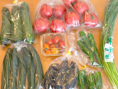 【8品目】もぎたて完熟夏野菜セット(トマト・なす・ズッキーニなど)