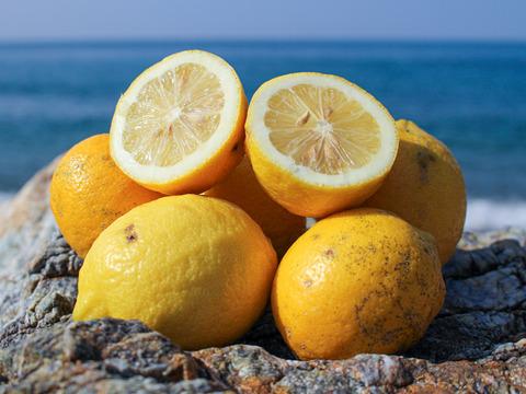 [1.5kg・訳あり]低農薬・とりたて新鮮レモン(大小混合)