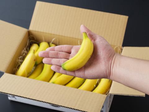 宮崎産・無農薬「流行りのミニバナナ」1Kg(8~10本)セット