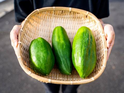 NEW RICH!酵素たっぷりMIYAZAKI GREEN PAPAYA(青パパイア/青パパイヤ)(1kg)