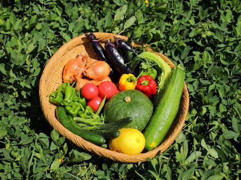 【1日3セット限定】【朝採り】ナスが大人気!化学農薬・化学肥料不使用栽培の旬の野菜セット【9~10品目】