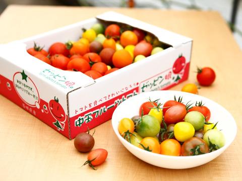 【ZM1.8】皮が薄くジューシーなゼッピン娘 × 映えるカラフルフルーツトマト 1.8kg #農カード付