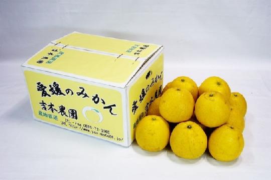 【完熟!】河内晩柑 [M〜2L] 5kg(約15個)