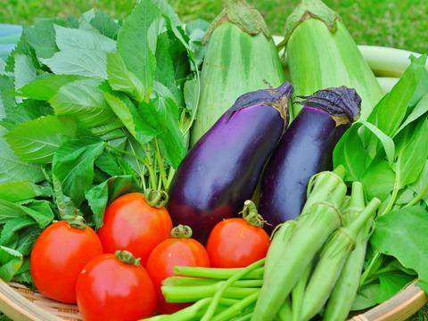 【季節野菜セット】食べごろ!贅沢な!おまかせ野菜詰め合わせ☆お二~三人様用