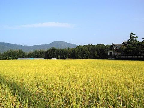 【特別栽培米】四万十産コシヒカリ「タケちゃん米」(玄米)10kg