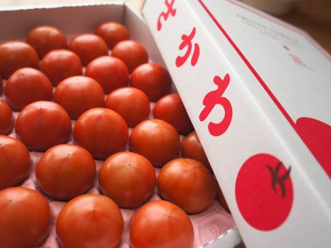 【秀品セレクト1,600g】コクと旨味をギュっと濃縮!フルーツトマト【冬~春が旬!】