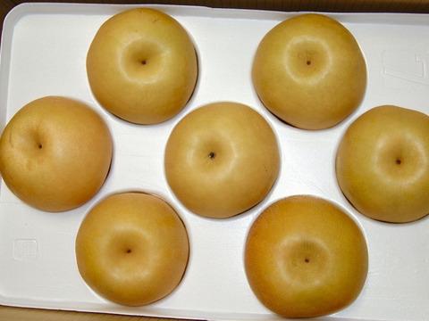 【ご家庭用】秋の味覚🎶新高梨 約5kg (12玉)少し小さめです。