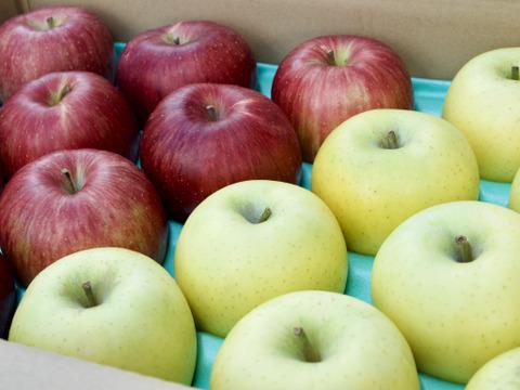 シナノスイート&シナノゴールド食べ比べセット♡信州りんご人気品種!