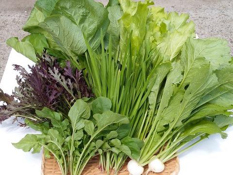 【初回限定BOX】希少な【自然栽培+固定種】の野菜セット