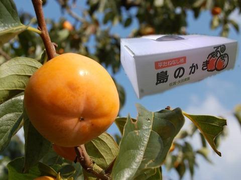 農薬節減栽培8割減 「島のかき」 5kg