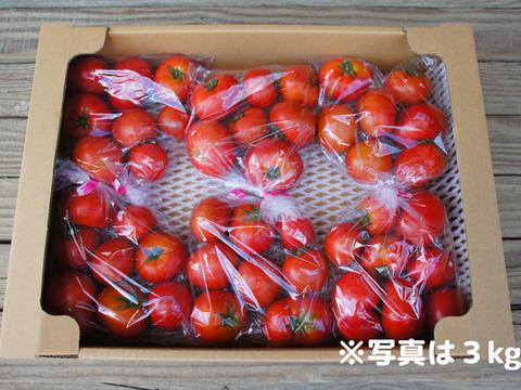 【規格外・大容量6kg!!】コクと旨味をギュっと濃縮!フルーツトマト【冬~春が旬!】