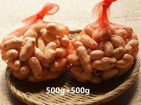 人気上昇中!茹でて最高の大粒落花生<おおまさり>(1kg)