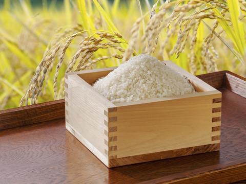 北アルプスの麓で育んだお米 長野県松川村産コシヒカリ10kg 精米歩合を選べます