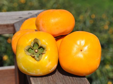 特別栽培たねなし柿 贈答用!約2㎏ さっくり甘い!奈良県産