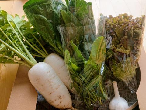【自然栽培】標高1100mの旬の野菜セット