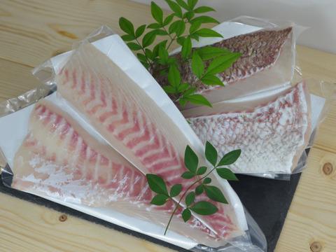 【がっつり食べるならこれ!】獅子島産真鯛(養殖)お刺身 1匹分