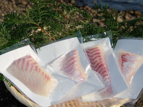 【もちもちで甘~い】獅子島産真鯛(養殖)お刺身用 4パック