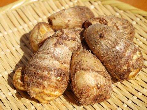 えぐみが少なくねっとりな【肥料・農薬不使用栽培】の里芋(1kg)