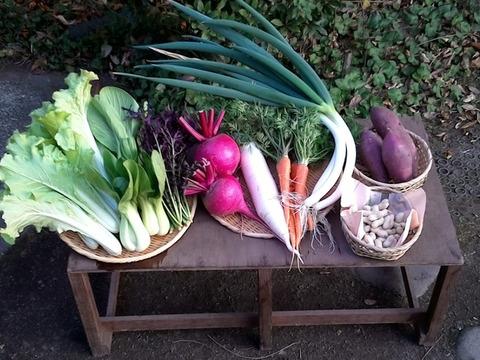 自然栽培野菜Mセット7~9種類