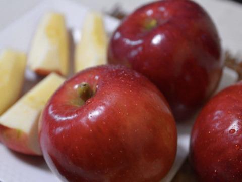 【先行予約】紅玉 酸味しっかりジャムやアップルパイなどに 家庭用 5kg