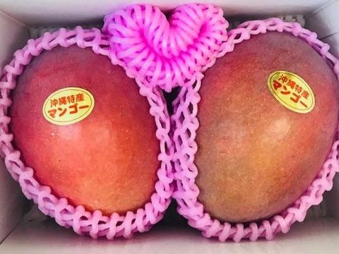 沖縄・宜野座育ちのマンゴー【優品・化粧箱、約1kg】