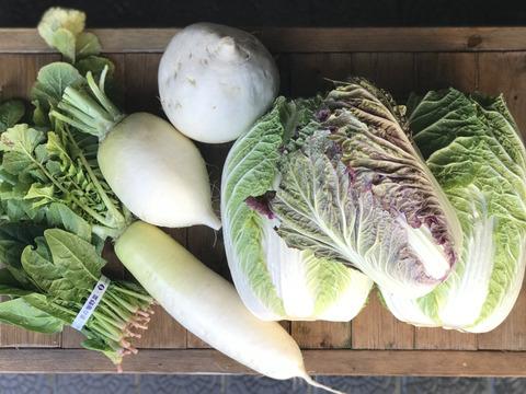 今季最終《白菜2玉》冬の京野菜セット6品目【漢方栽培】