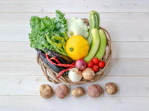 【自然栽培&固定種のみ!1名様サイズ】『まえむき。』の、自然と一緒に育てた旬の野菜セット5種類