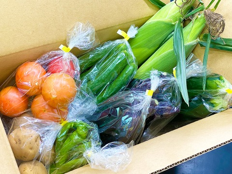 "【4kg】""盛夏野菜"" 大盛り詰め合わせ"