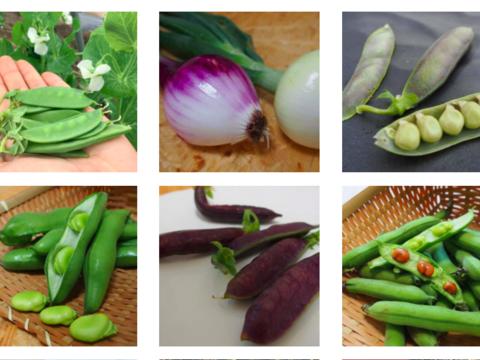 楽しい野菜の宝箱「やさいのこばこ」(Sサイズ)