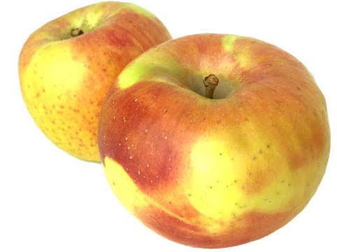 名 りんご ぐんま 月 北海道亀田郡七飯町 築城果樹園