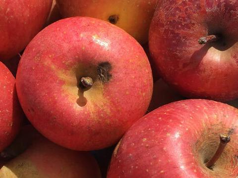 サンふじ りんご 加工用3kg ジュースやジャムなどに最適!※商品説明文必読※