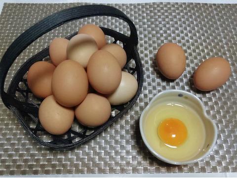 期間限定!計37個に増量! ぷりんっと濃い比内地鶏の平飼い卵27ヶ+3ケ(割れ保証)+10ケ (期間限定春季産卵頻度増加による増量)【小分け対応可】