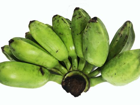 【台風被害】未熟だけど料理等にお使いいただけます!無農薬のドワーフ・アイスクリームバナナ 2kg