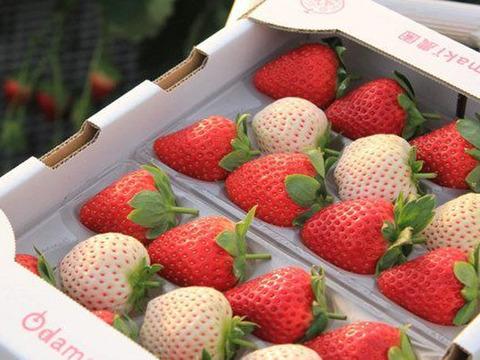 お祝いに!紅白いちご『古都華&天使のいちご』特別栽培農産物 2パック1箱