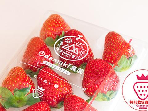 奈良県オリジナル新品種いちご!『珠姫&古都華』特別栽培農産物 2パック1箱