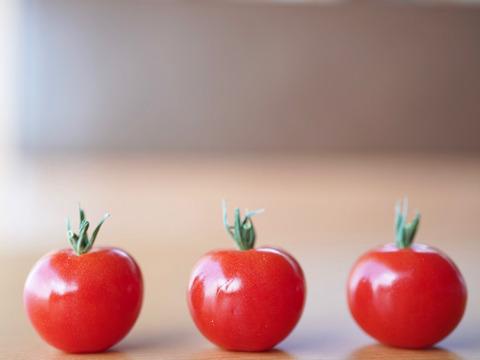 トマト農家がこだわったミニトマト🍅プチぷよ(6パック)