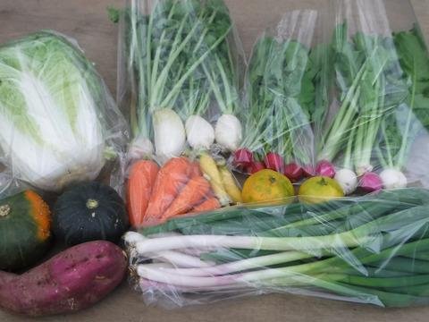 野菜ボックス Sサイズ約6~7品(1~2人用)